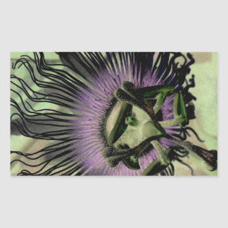 Purple and Green Passion Flower Bloom Rectangular Sticker
