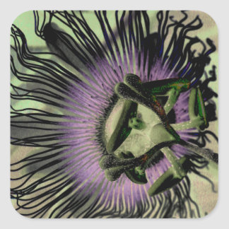Purple and Green Passion Flower Bloom Square Sticker