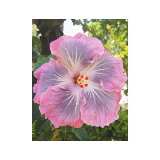 Purple and Pink Hibiscus Flower Canvas Print