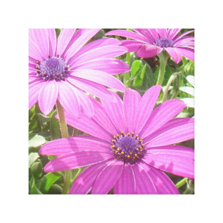 Purple And Pink Tropical Daisy Flower Canvas Print