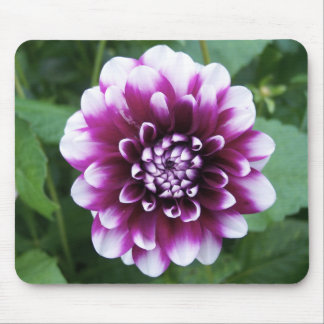 Purple and White Dahlia Mouse Mat
