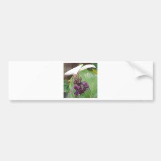 Purple and White flower Bumper Sticker
