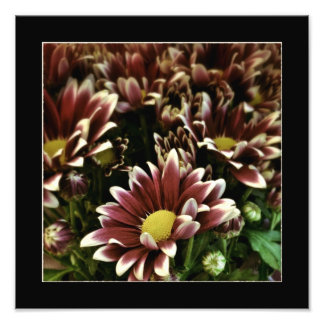 Purple and White Flowers Poster Art Photo