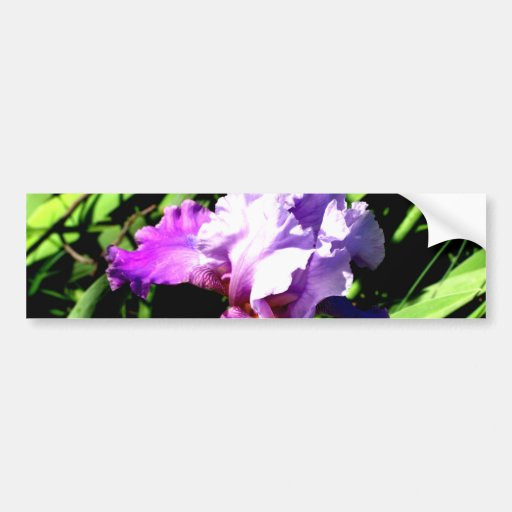 Purple and White Iris Bumper Stickers