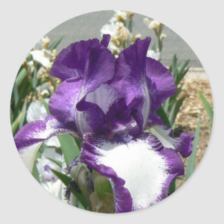 Purple and White Iris Classic Round Sticker