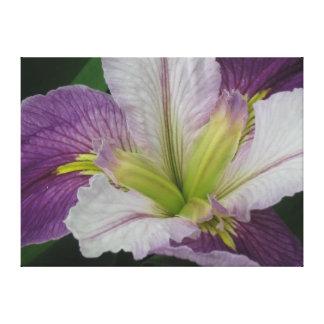 Purple and White Iris Hybrid Canvas Print