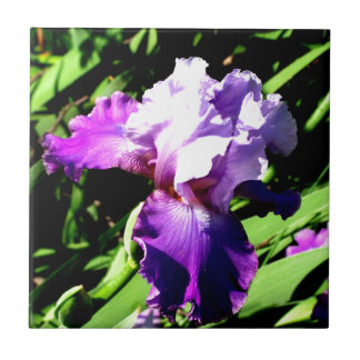 Purple and White Iris Small Square Tile
