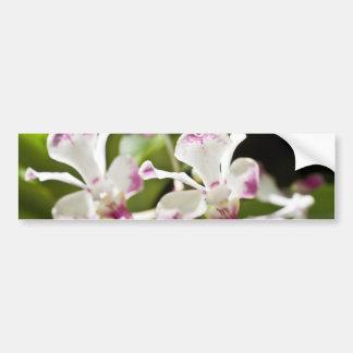 Purple and White Orchid Bumper Sticker