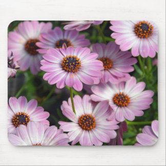 Purple and white osteospermum flowers mouse pad