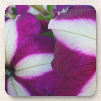 Purple and White Striped Petunias Beverage Coasters