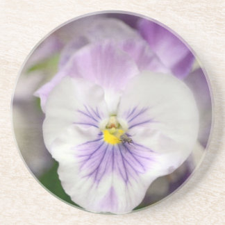 Purple and White Violas by Shirley Taylor Coaster