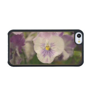 Purple And White Violas Carved® Maple iPhone 5C Slim Case