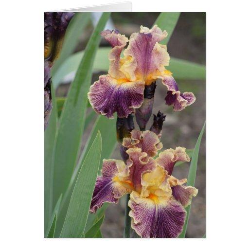 Purple and yellow iris card