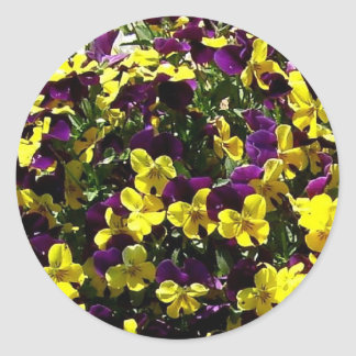 Purple and Yellow Pansies Stickers