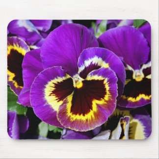 Purple and yellow pansy flower mouse pad