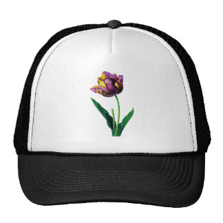 Purple and Yellow Tulip by Redoute Cap