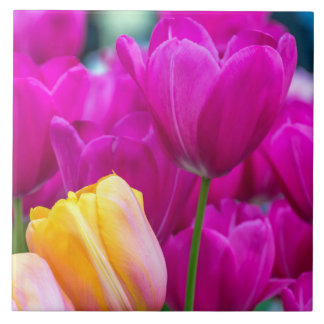 Purple and yellow tulips ceramic photo tile