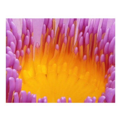 Purple and Yellow Water Lily Flower Blossom Custom Flyer