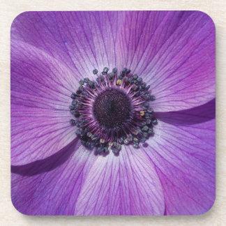 Purple anemone blossom coaster