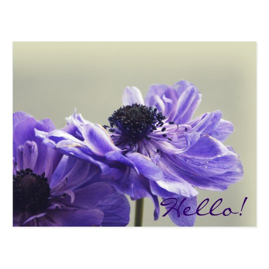 Purple Anemone Photo Postcard