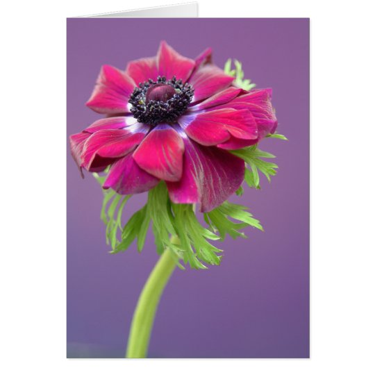 purple anenome card