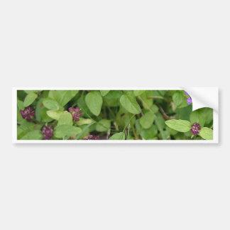Purple Archangel Wildflower Bumper Stickers