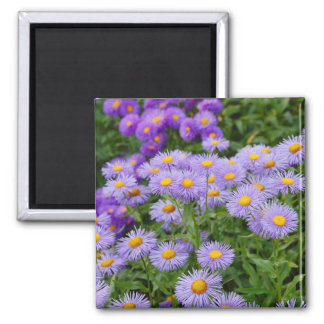 Purple aster flowers print magnet
