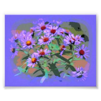 purple asters photo print