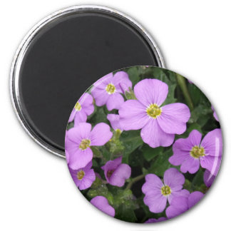 Purple Aubretia Flowers Refrigerator Magnet