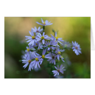 Purple Autumn Asters Floral Wildflower Card