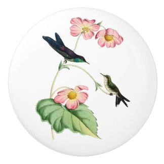 Purple Backed Thornbill Hummingbird Ceramic Knob
