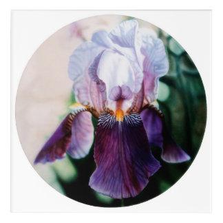 Purple Bearded Dutch Iris Acrylic Print