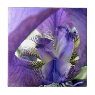 Purple Bearded Iris Flower Floral Macro Tiles