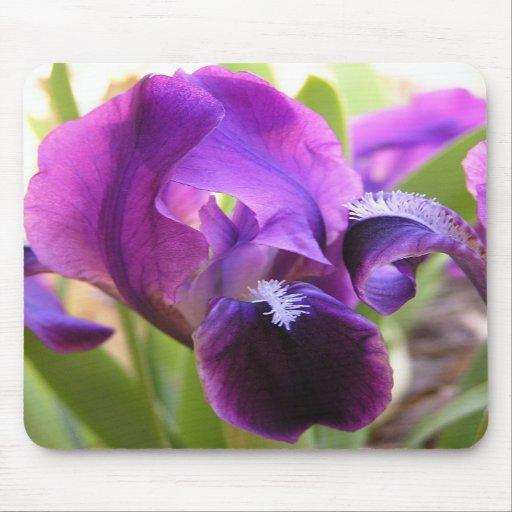 Purple Beauty mousepad