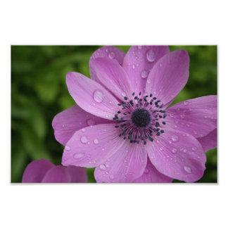 Purple beauty photo