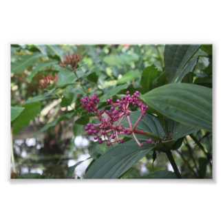 Purple Bids Flower Photographic Print