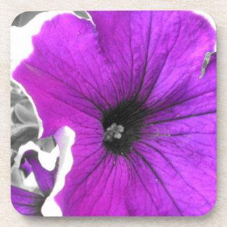 Purple Black Tinted Petunias Coasters