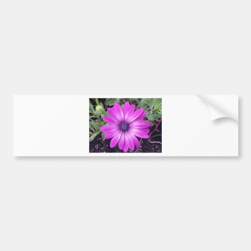 Purple bloom bumper sticker