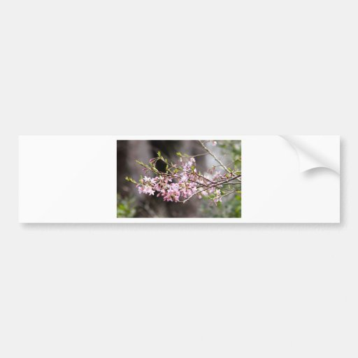 Purple blooms bumper stickers