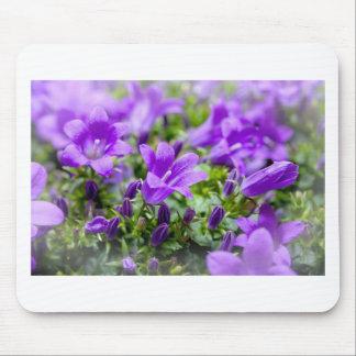 purple blossoms vines plants flora bellflower mouse pad