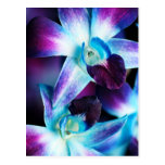 Purple & Blue Dendrobium Orchid Customised Orchids