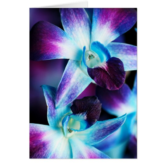 Purple & Blue Dendrobium Orchid Customised Orchids Card