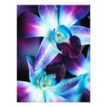 Purple & Blue Dendrobium Orchid Customised Orchids Photo