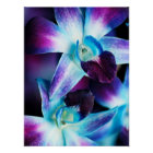 Purple & Blue Dendrobium Orchid Customised Orchids Poster