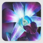 Purple & Blue Dendrobium Orchid Customised Orchids Square Sticker