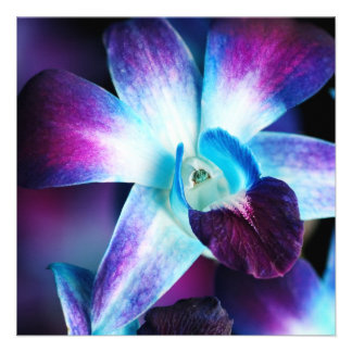 Purple & Blue Dendrobium Orchid Customized Orchids Invitations