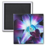 Purple & Blue Dendrobium Orchid Customized Orchids Refrigerator Magnet