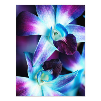 Purple & Blue Dendrobium Orchid Customized Orchids Photo Print