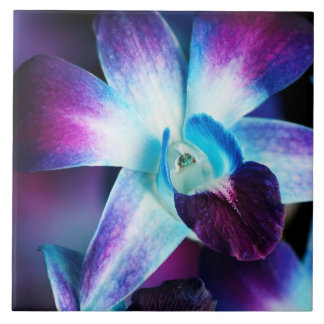 Purple & Blue Dendrobium Orchid Customized Orchids Tile