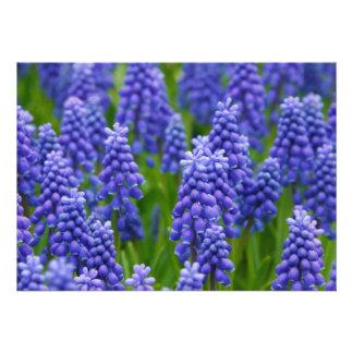 PURPLE BLUE GRAPE FLOWERS NATURE GRASS BEAUTY SCEN PERSONALIZED INVITATION